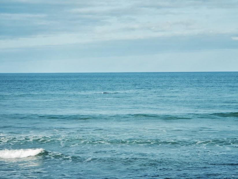 Oceans Whales Whale Great Ocean Road