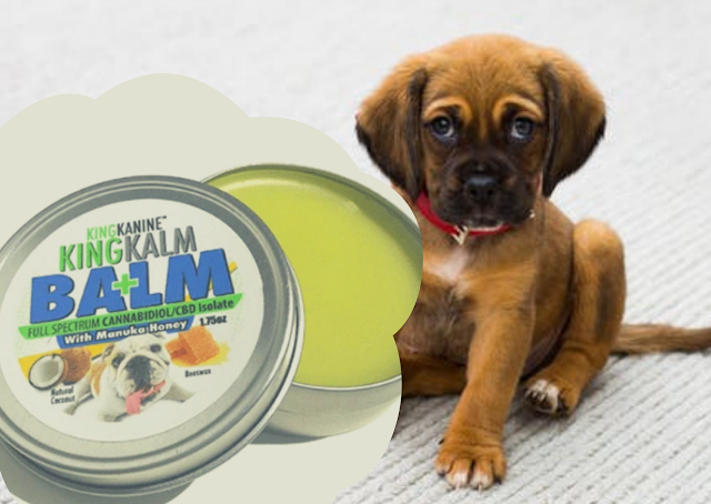Should You Buy Dog Paw Cream Online?