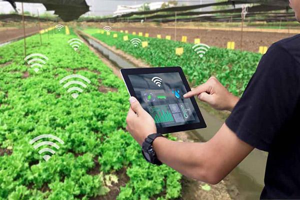 Canh tác cây trồng từ xa nhờ ứng dụng công nghệ IOT