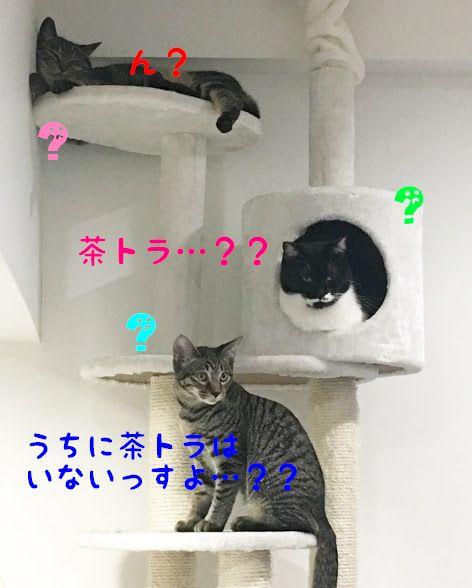 茶トラとはどんな猫?特徴と性格は?その人気と魅力について