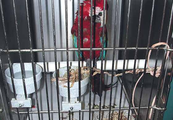 A plastic tube perch in a cage