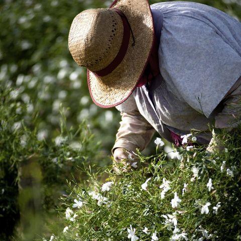 ความพิเศษของดอกมะลิใน Gabrielle Essence - CHANEL 05