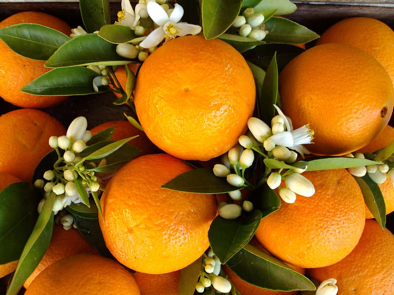 https://p0.pikrepo.com/preview/584/771/orange-fruits-and-white-flowers.jpg