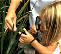 A imagem mostra uma criança loura com uma lupa observando folhagens.
