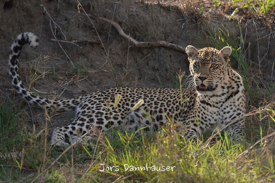 Karula Buffelshoek 28 Jan 2016.jpg