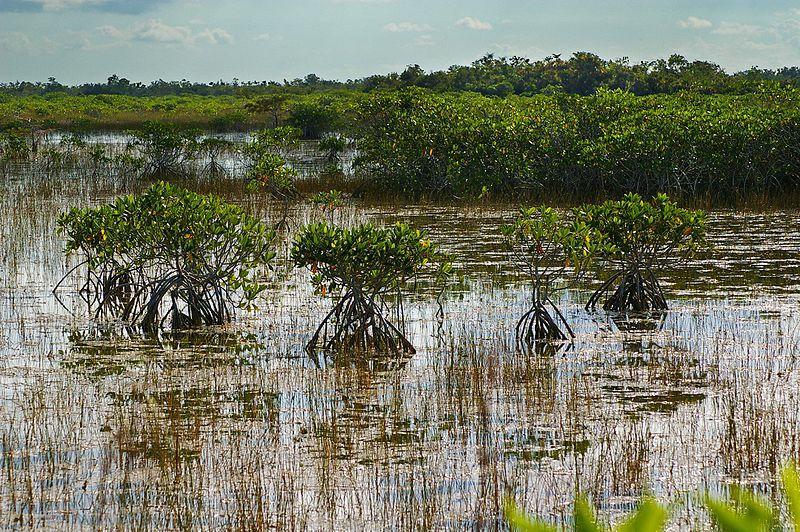 File:Everglades National Park 03.jpg