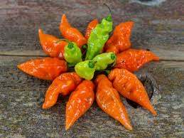 Habanadas arranged in a circle. Present are both orange ripened peppers and green underripe peppers.