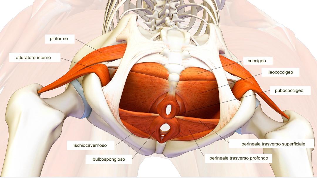 esercizi di stabilizzazione pelvica per dolori articolari sacroiliaci