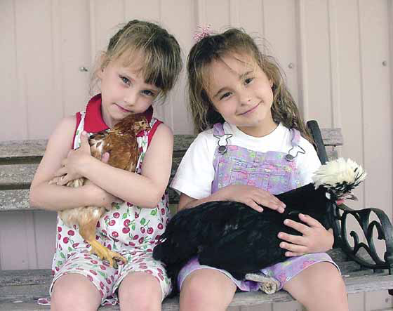 Often overlooked as pets, some chicken breeds may be good pets for children