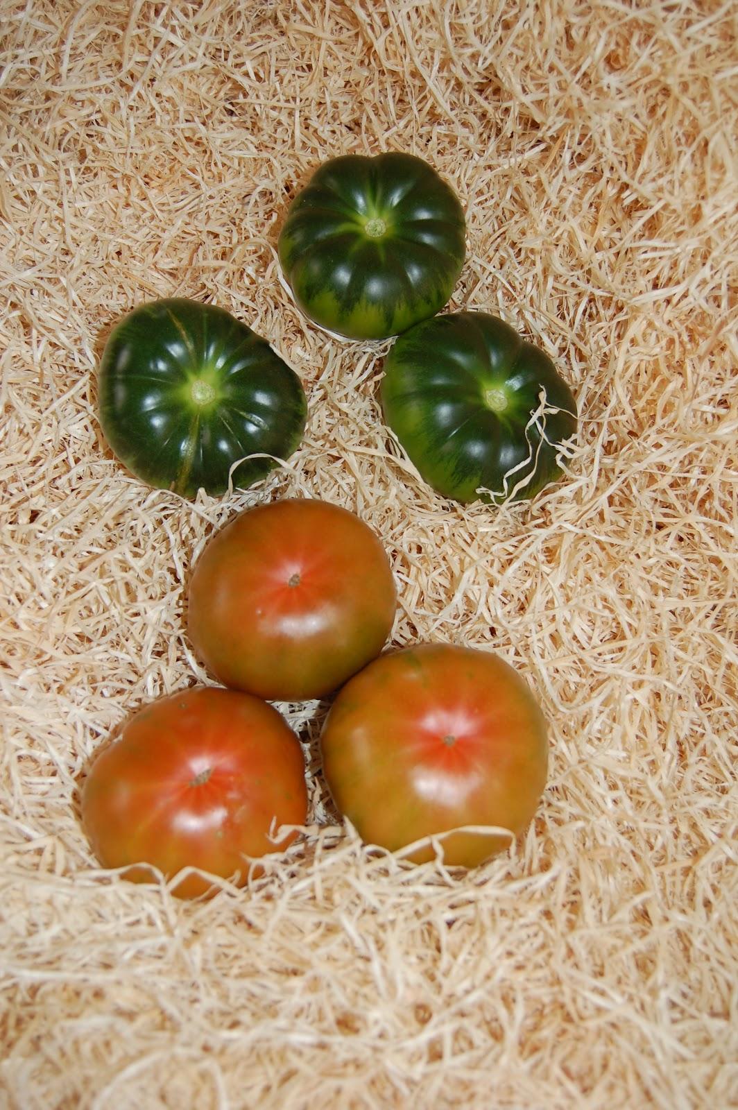 File:Tomate raf.JPG - Wikimedia Commons