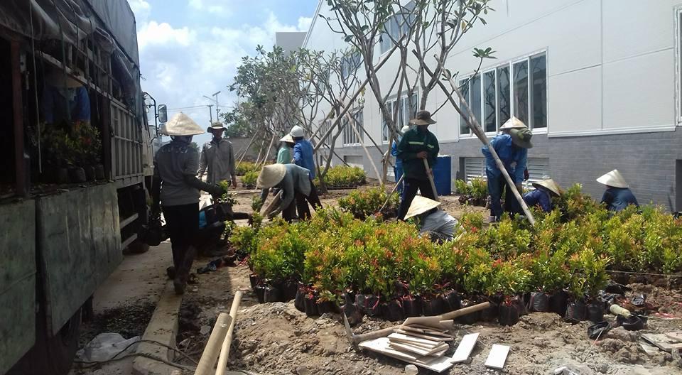 Dịch vụ chăm sóc cây xanh tại bình dương với đội ngũ chuyên nghiệp
