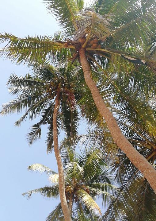 Afbeelding kan het volgende bevatten: boom, lucht, plant, buiten en natuur