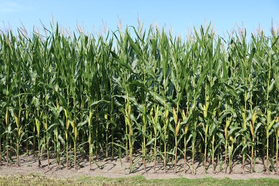 Afianza el agro sostenible
