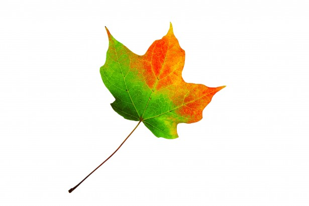 Leaf Changing Color Free Stock Photo - Public Domain Pictures