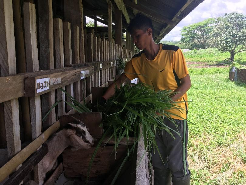BSA animal Science student conducting his research at VSU Villaba's goatery project.