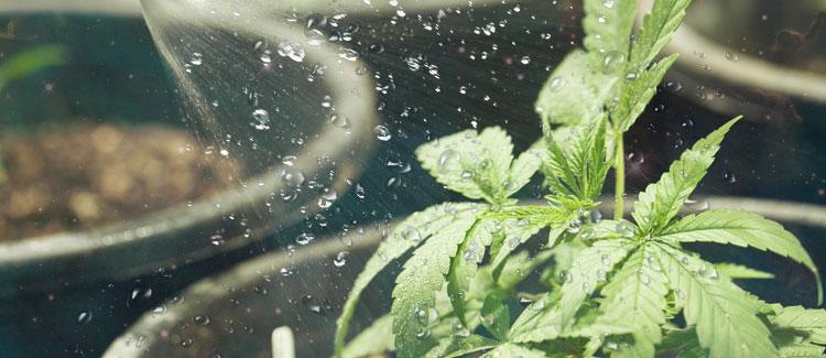 Марихуана дождь дтп из за марихуаны
