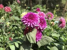 Free photo Lodhi Garden Nature Flowers Park View Delhi Park - Max Pixel