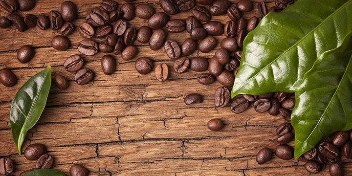 Cà phê hạt giá sỉ Motherland ngon- bổ -rẻ nhất thị trường