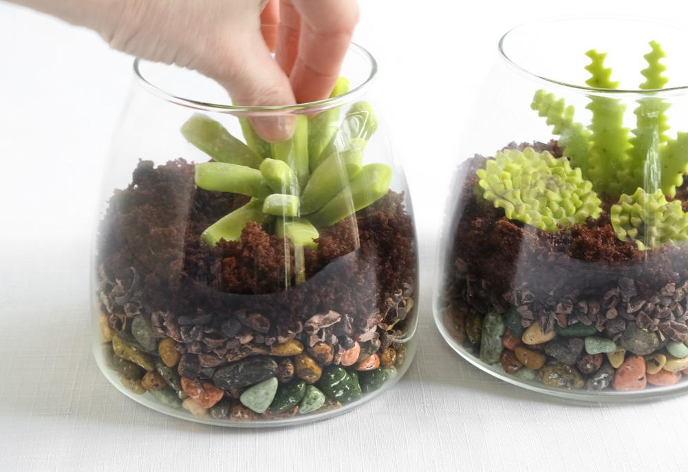 Assembled edible terrariums