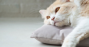 Kidney disease in cats when to euthanize