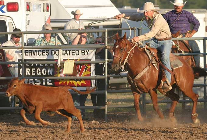 Calf Roping Horse Calf Roping Horses in Training