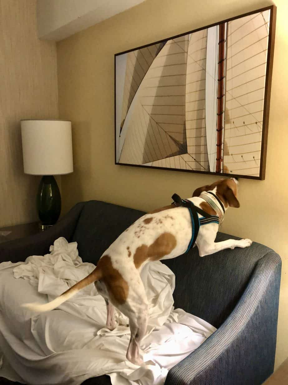 bed bug inspection in a hotel