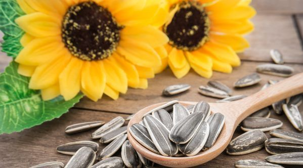 sementes de girassol_beneficios