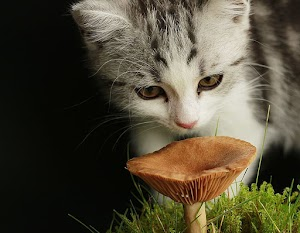 Which mushrooms can be deadly for cats