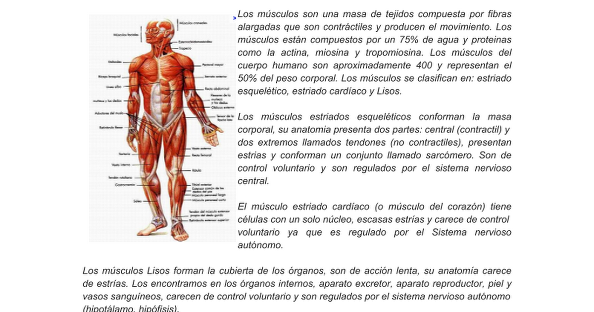 Excepcional órgano En Mapa Corporal Bandera - Anatomía de Las ...