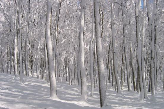美人林冬景