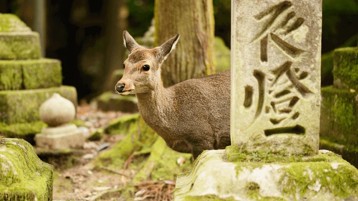 Nara Deer Park, Nara, Japan