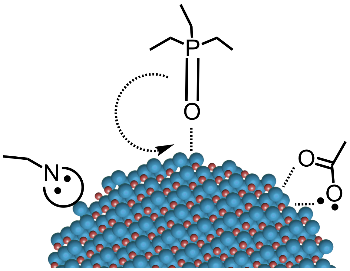 Organic surface-capping ligands for CdSe quantum dots