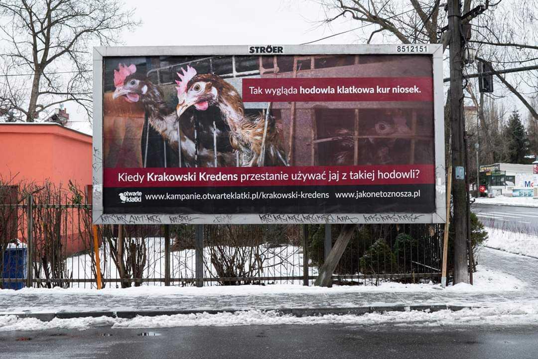 Zamiast walczyć o los zwierząt, walczą z billboardami