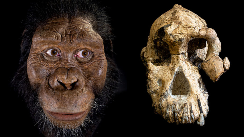 A hominid skull fossil reveals the face of Lucy's possible ...