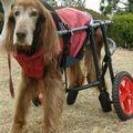 C:UsersuserDesktopTomomi2カット済み大型犬LL4輪04.jpg