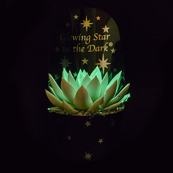 Image result for glow in the dark succulents