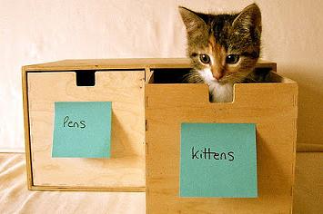 organizecats.jpg