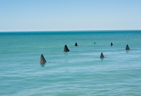 http://img.webmd.com/dtmcms/live/webmd/consumer_assets/site_images/articles/health_tools/generalized_anxiety_slideshow/getty_rm_photo_of_shark_fins_in_water.jpg