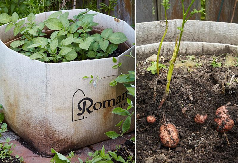 how-to-grow-potatoes-in-a-box2.jpg