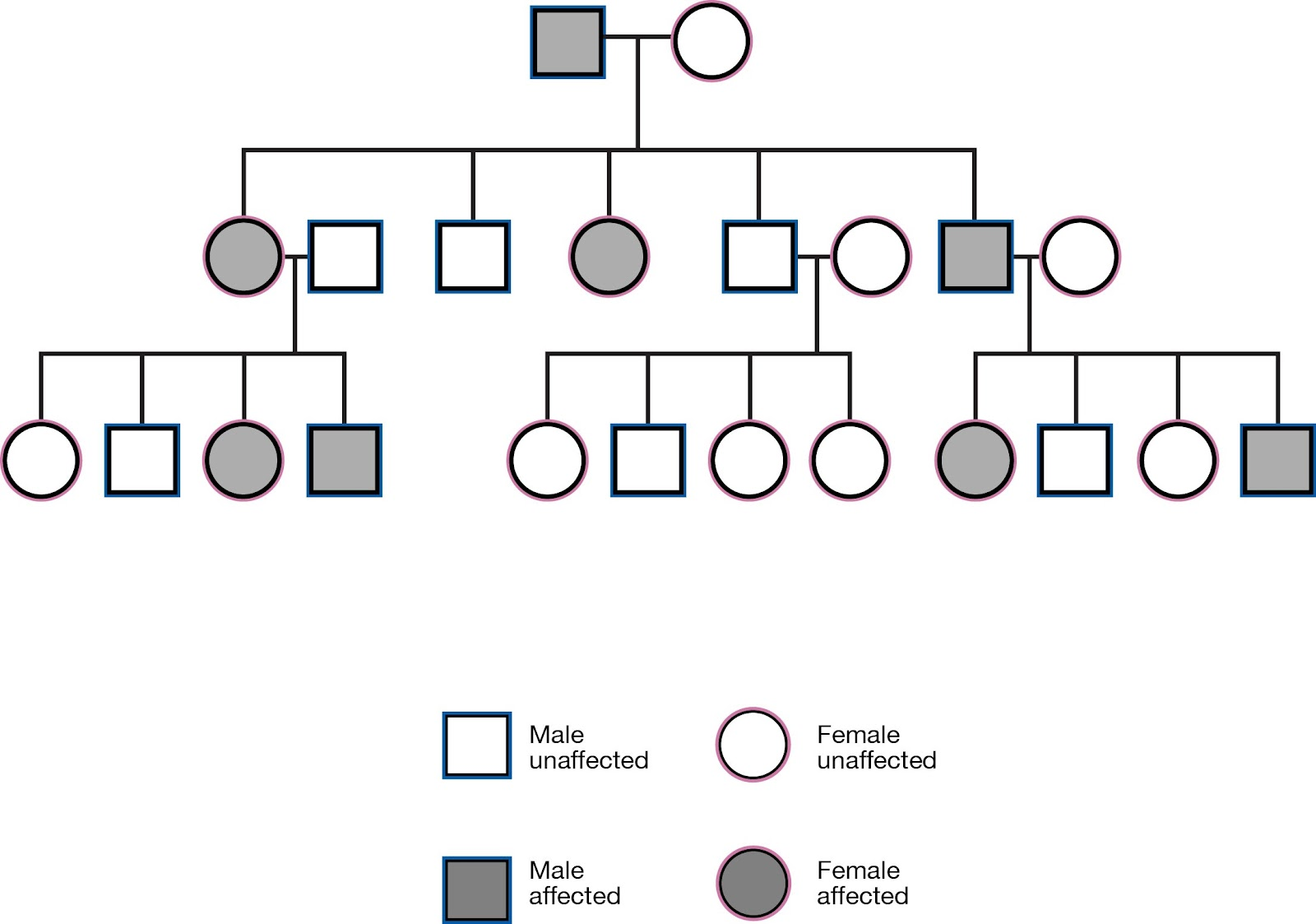 Heredity it is used determine if the pedigree chart shows an autosomal or x linked disease if it is a 5050 ratio between men and women the disorder is autosomal pooptronica Gallery