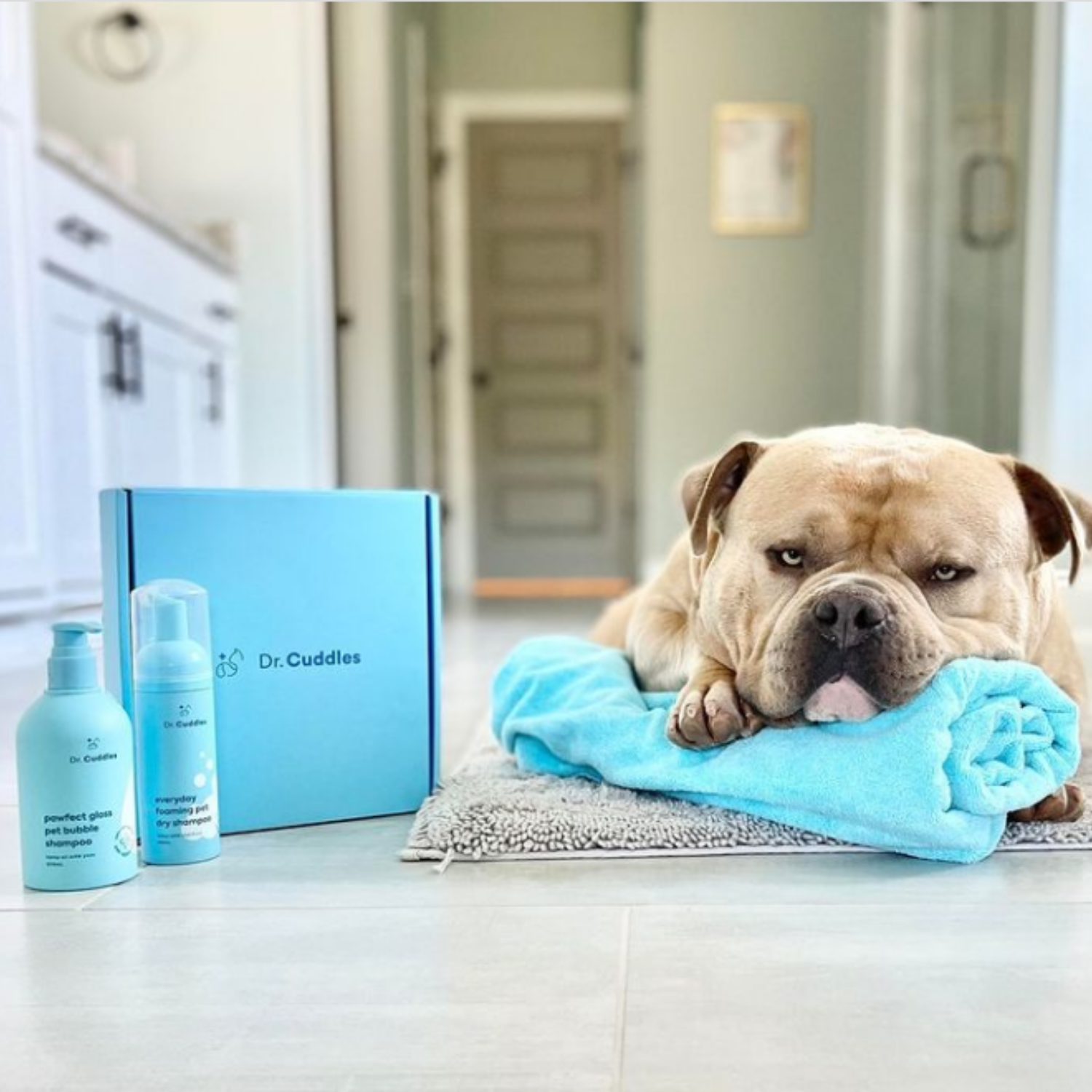 a bulldog lays next to the dr cuddles grooming duo