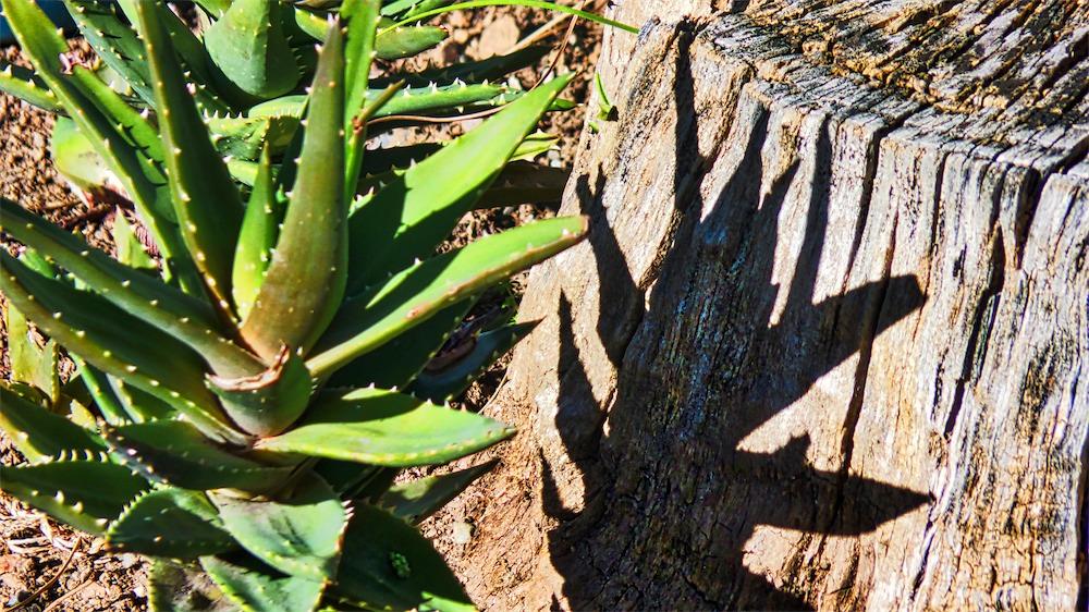 Cacti Shadow.jpg