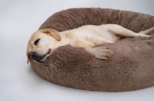 Chó ngủ nhiều có tốt không?