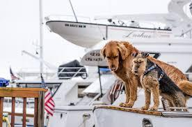 Sailing Tips for safety with pets