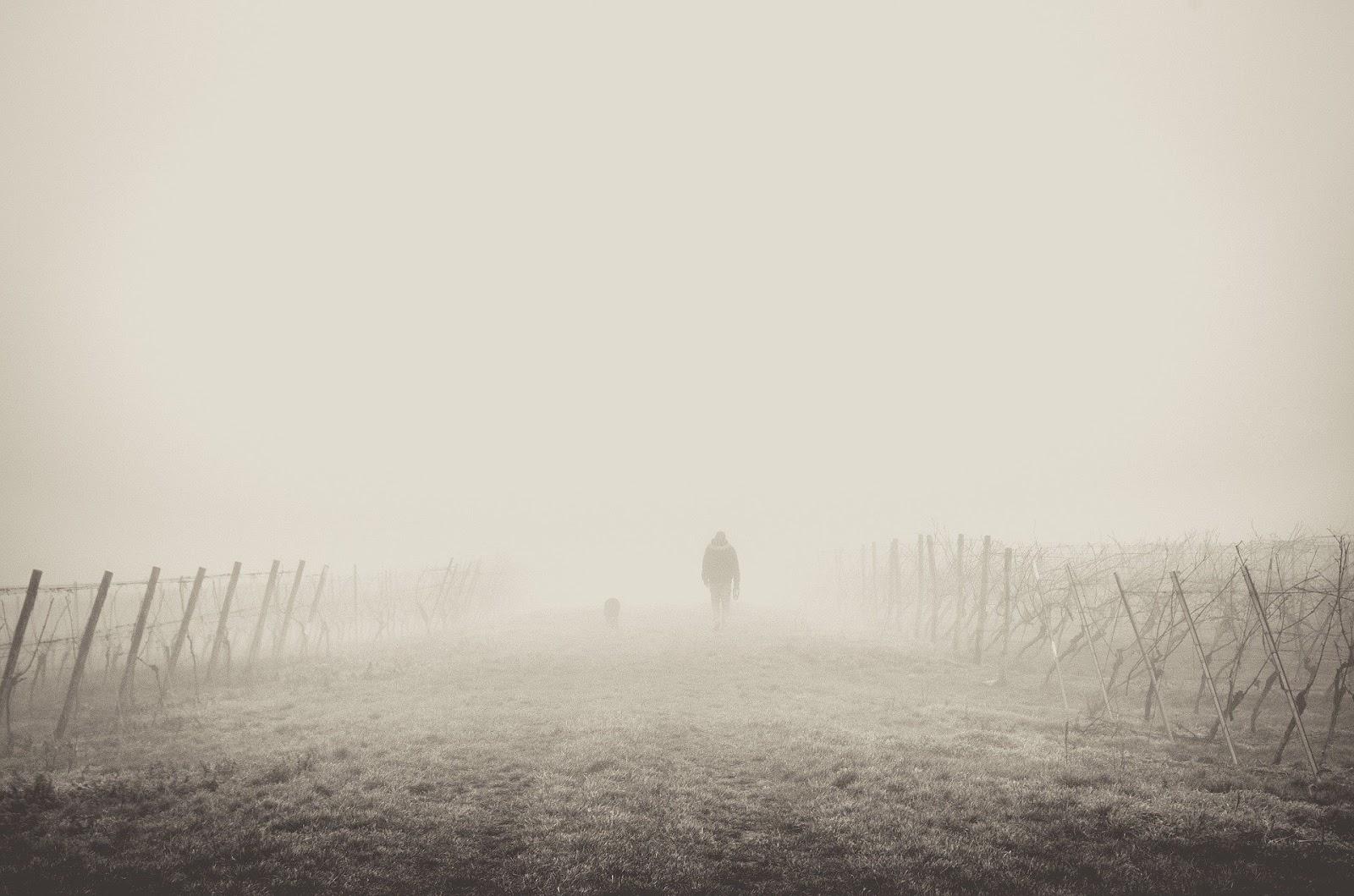 fog-1209205_1920.jpg