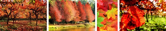 O outono na serra gaúcha é puro encantamento para nos inspirar em nossa colcha patchwork outono. Tons amarelados, avermelhados, terra e verdes são presença marcante nessa época do ano, não há como não se encantar!