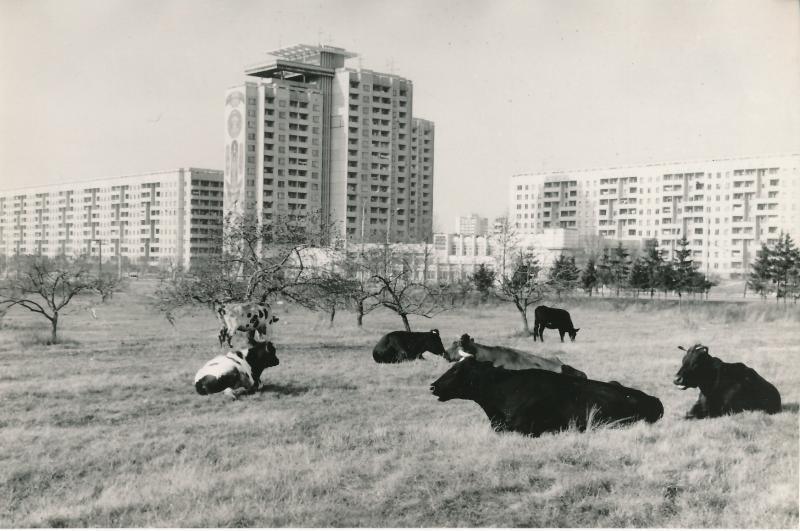 Станет ли природа частью городов?
