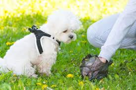 The dog owner is cleaning the dog poop