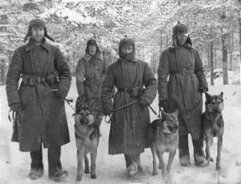 Собаки на военной  службе в РККА