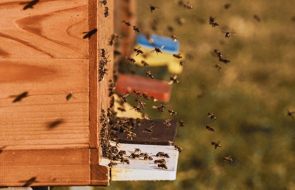 pszczela rodzina